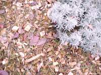 Sample of tree chips